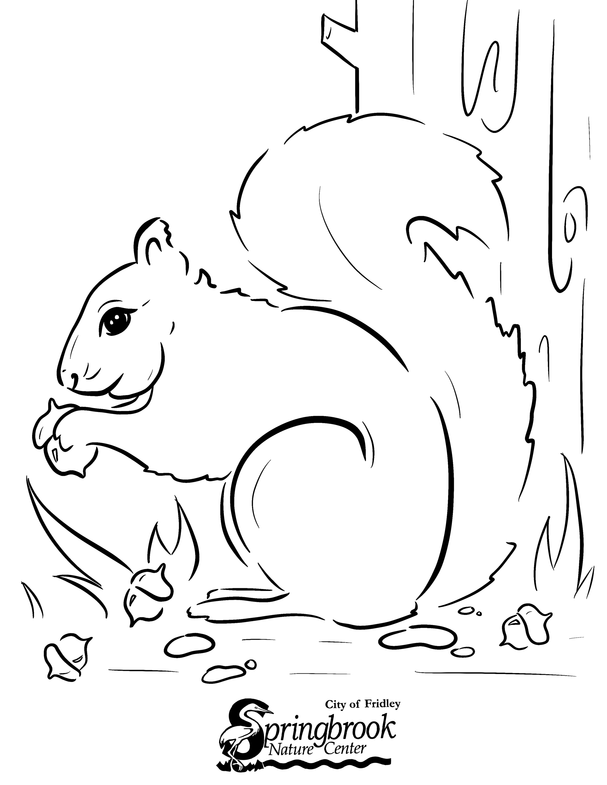 Squirrel Opens in new window